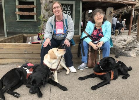 photo of 3 guide dogs